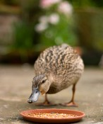 Even Ducks Know the Importance of Prospecting | Keeping Current Matters
